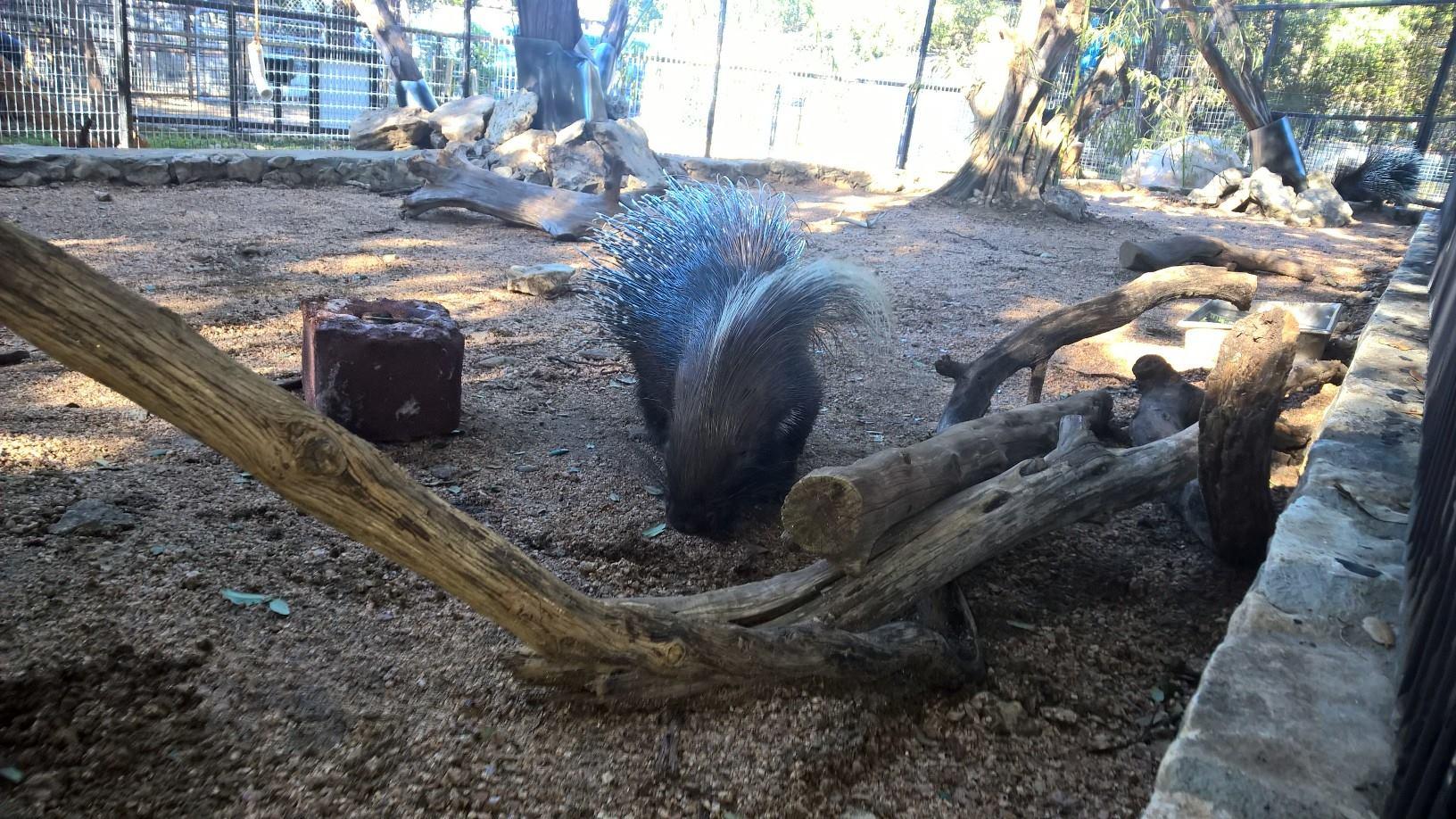 Porcupine3
