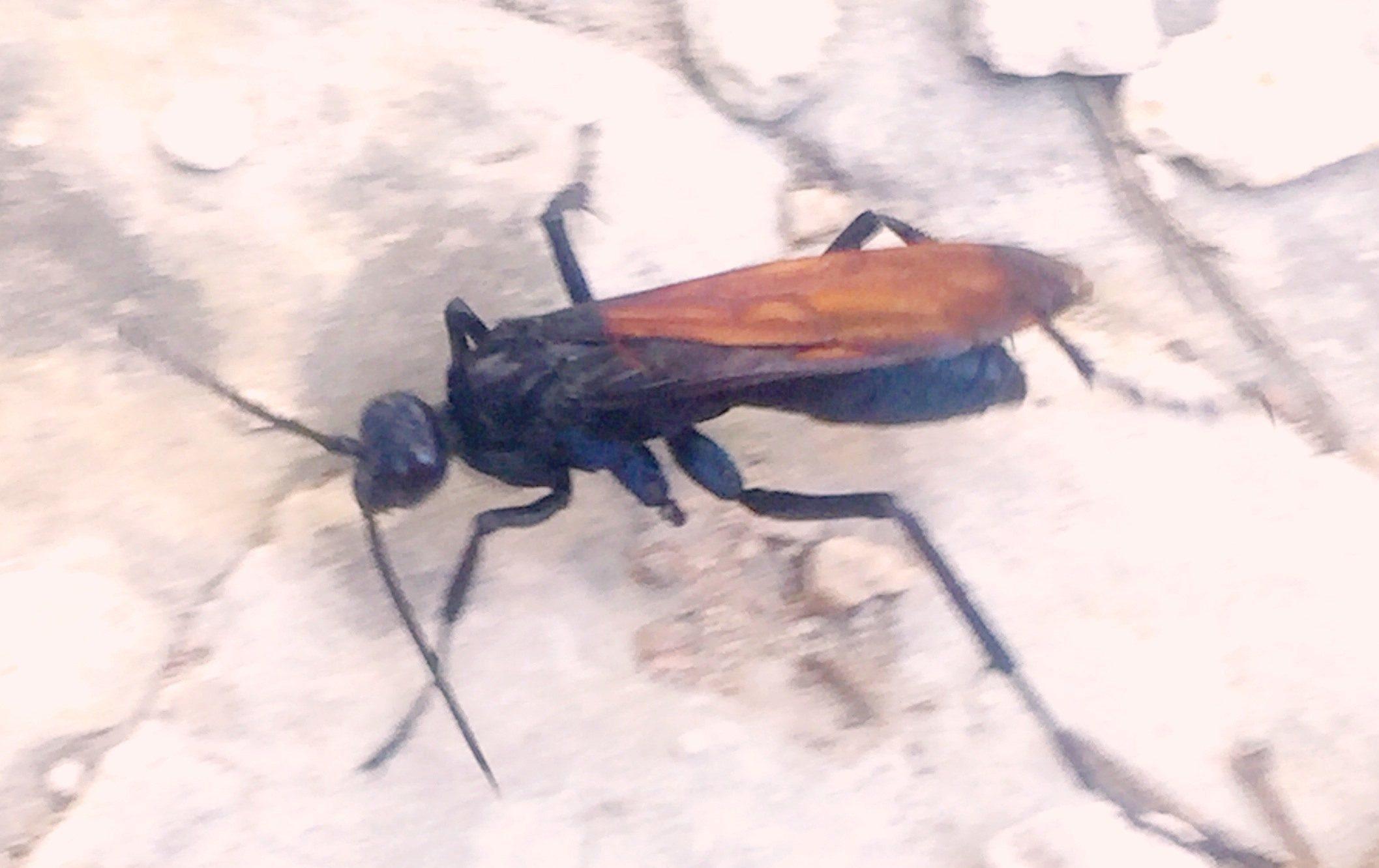 Native Texas Wildlife